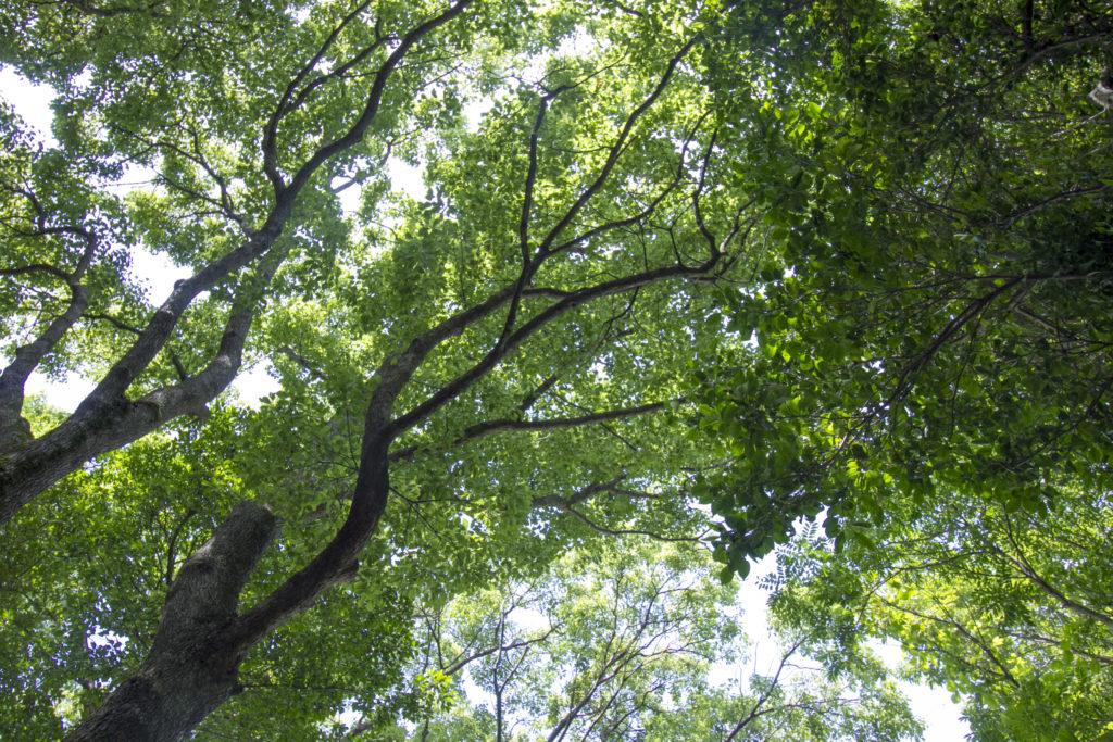 豊島美術館 木々